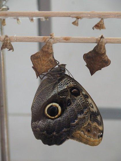 Schmetterlingshaus, Vienna, Wien, Sehenswürdigkeit, skurril, besonders, Städtetrip, allein reisen, Backpacking, allein reisen als Frau
