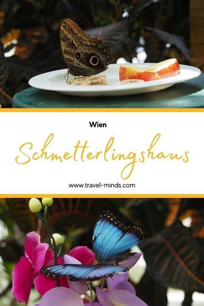 Schmetterlingshaus, Vienna, Wien, Sehenswürdigkeit, skurril, besonders, Städtetrip, allein reisen, Backpacking, allein reisen als Frau, Pinterest